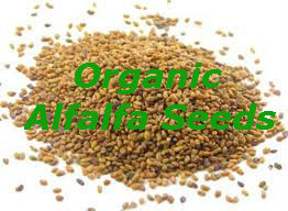 Raw Organic Alfalfa Seeds 250g