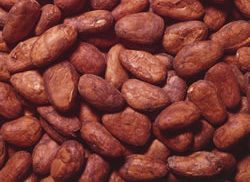 Raw Organic Whole Cacao Beans 250g